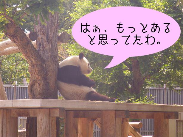 パンダさん_R