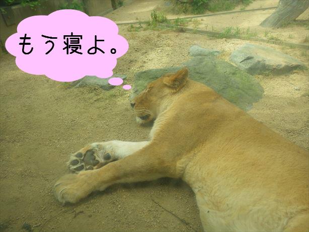ライオンさん_R