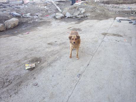理塘:肉まん食べてたら犬に狙われた_R