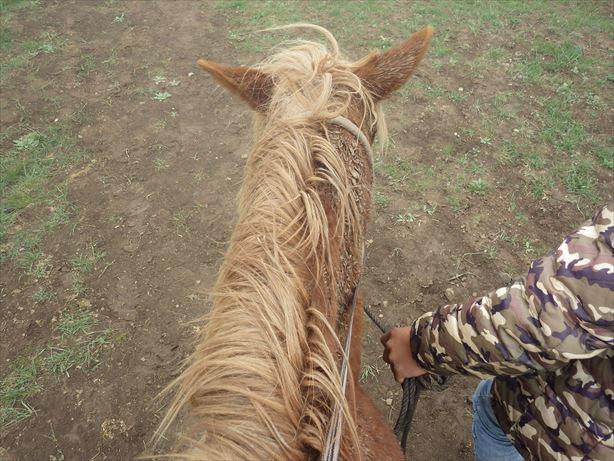 夏河:乗馬に挑戦 (1)_R