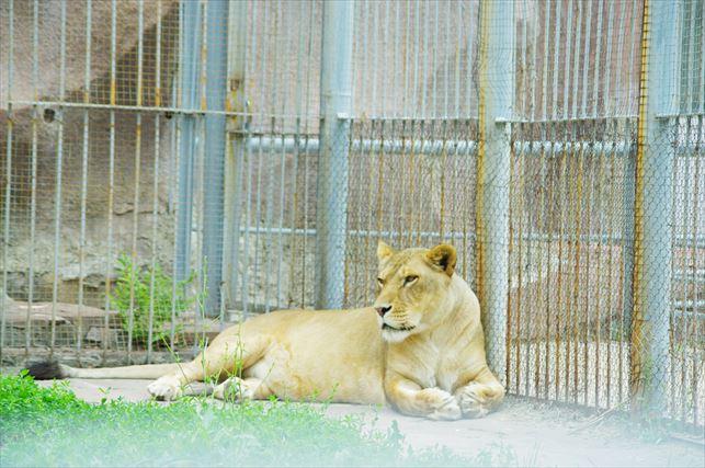 アルマトイの動物園 (1)_R