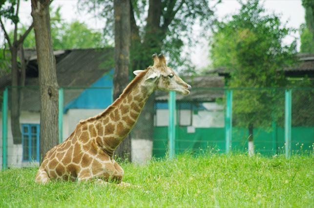 アルマトイの動物園 (17)_R