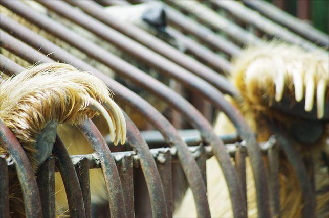 アルマトイの動物園 (38)_R