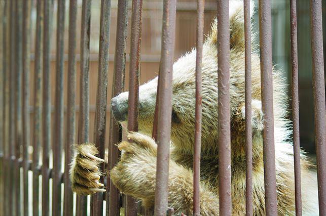 アルマトイの動物園 (45)_R