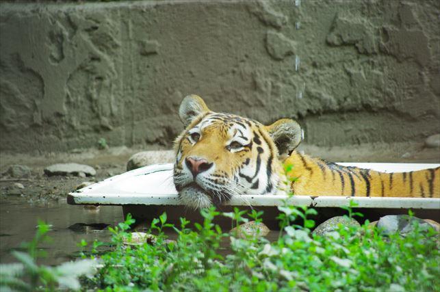 アルマトイの動物園 (82)_R