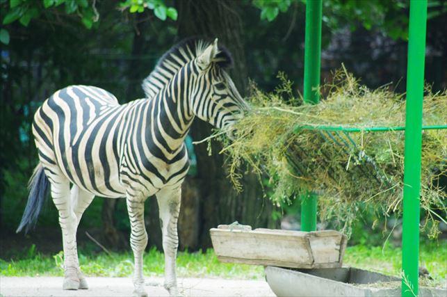 アルマトゥイの動物園 (7)