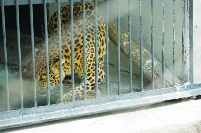 ドゥシャンベ動物園 (2)_R