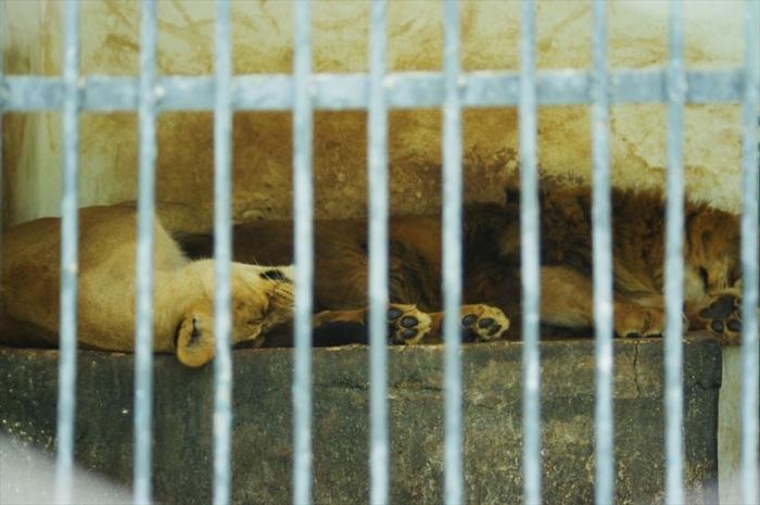 ドゥシャンベ動物園 (3)_R