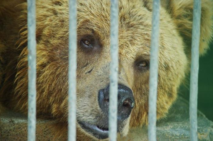 ドゥシャンベ動物園 (5)_R