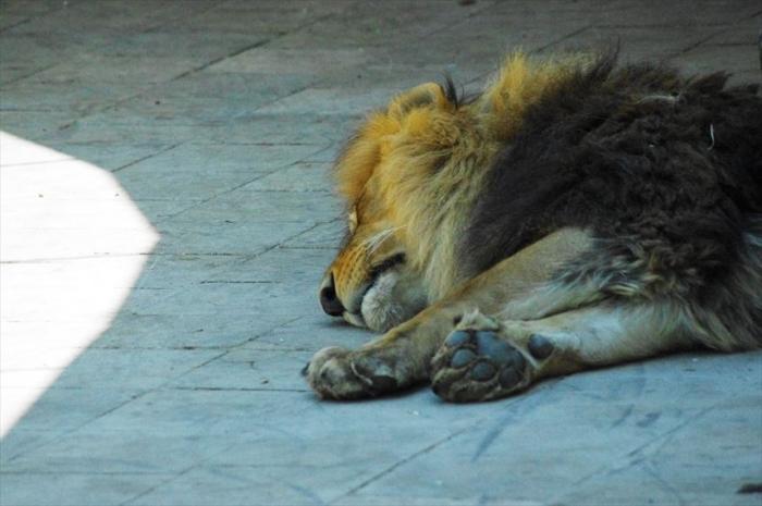 バクー動物園 (5)