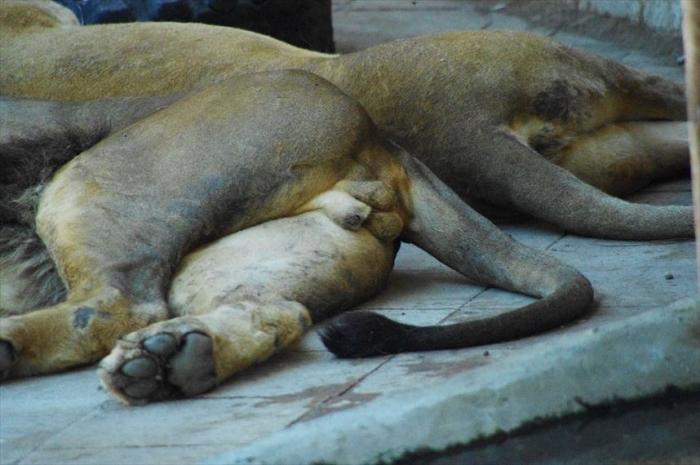 バクー動物園 (6)