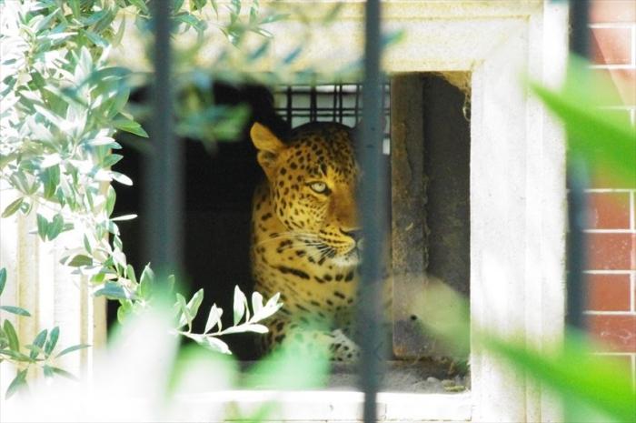 バクー動物園 (8)