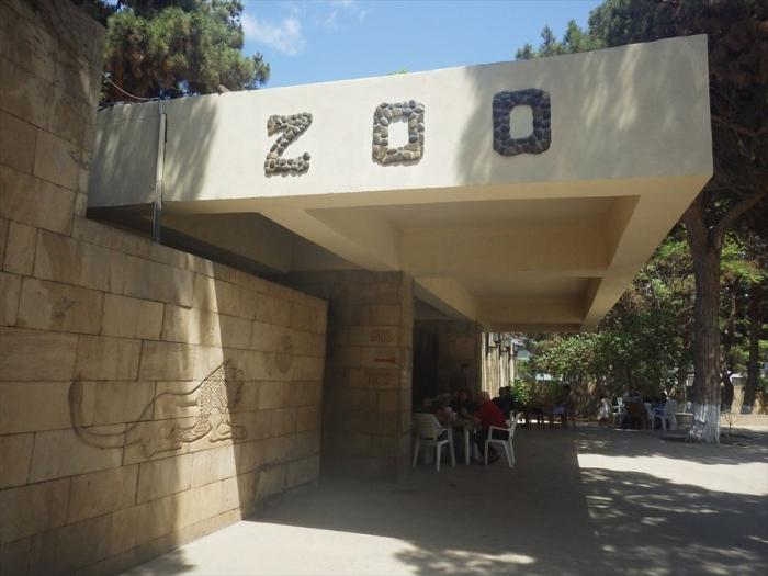 バクー動物園 (10)