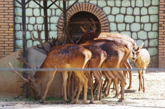 テヘラン動物園 (13)