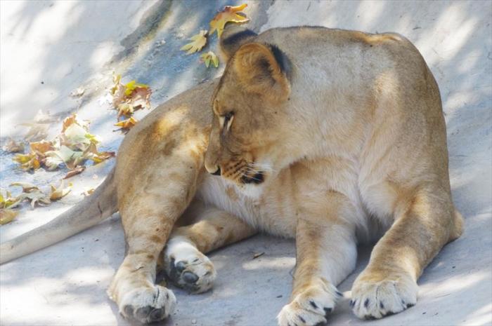テヘラン動物園 (28)