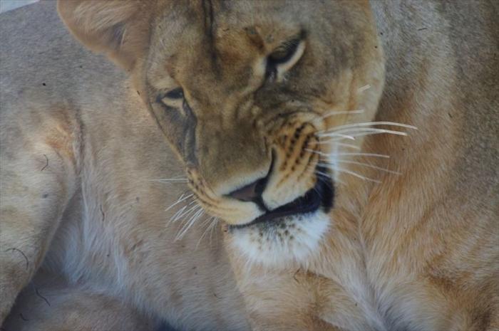 テヘラン動物園 (37)