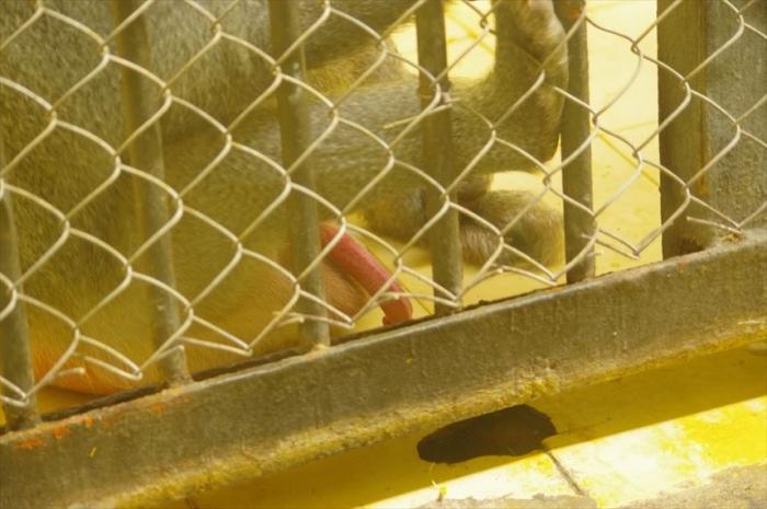 ソフィア動物園 (122)