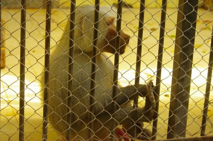 ソフィア動物園 (123)